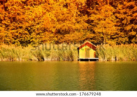 Autumn forest in sunset - stock photo