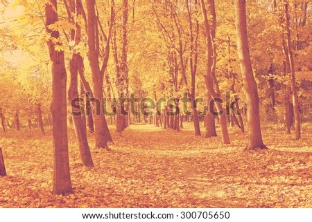 Autumn forest in sunset light. Beautiful nature background.retro - stock photo