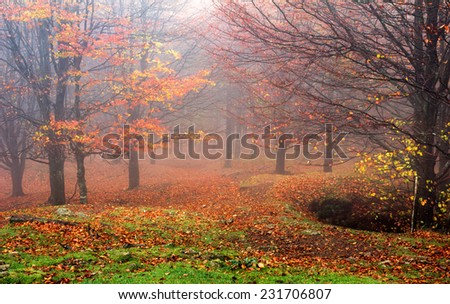 Autumn forest  in the Basque Country, Spain.