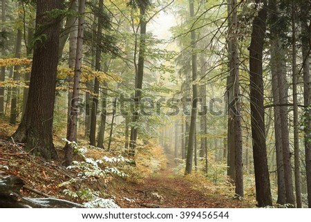 Autumn forest in the fog after a light snowfall. - stock photo