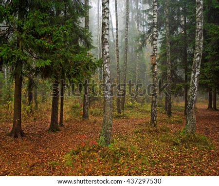 autumn forest in the foggy day - stock photo