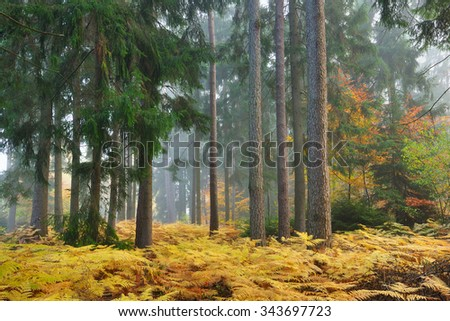 Autumn forest in the morning light