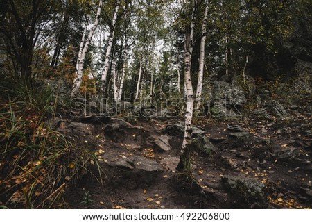 Autumn forest in the mountains. Southern Urals, Taganay National Park.