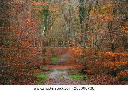 Autumn forest in the Netherlands - stock photo