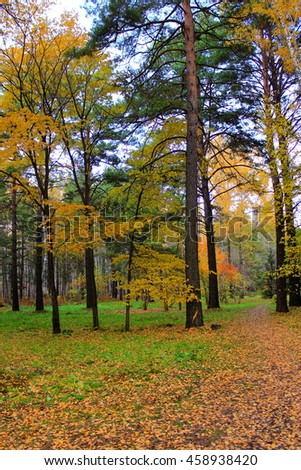 Autumn forest landscape, botanical garden