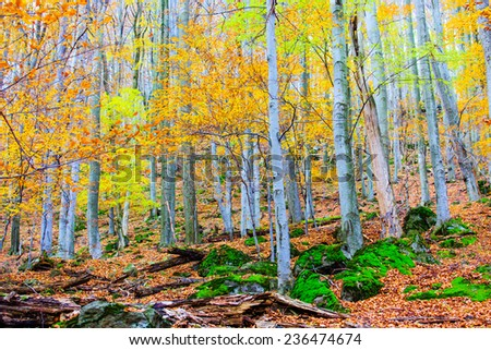 Autumn forest landscape in Europe. - stock photo