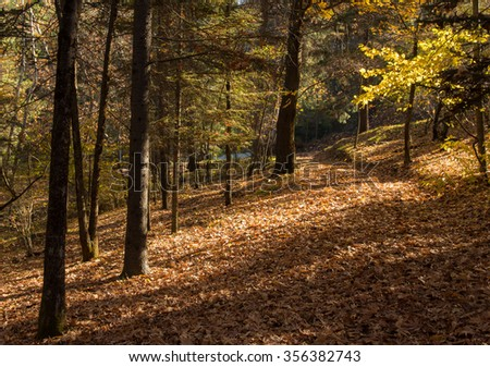 Autumn forest landscape with maple yellow leaves on the ground at Troodos mountains in Cyprus.