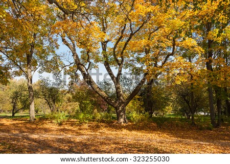 Autumn forest landscape with old trees and a footpath - stock photo