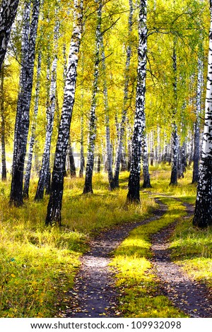 autumn forest landscape with the brich and path - stock photo