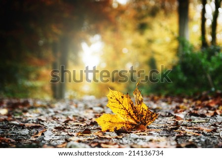 Autumn forest landscape with yellow leaves  - stock photo