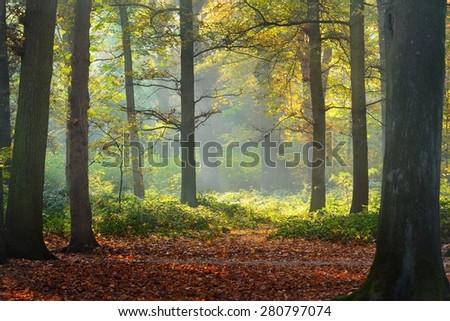 Autumn forest. Nachtegalenpark in Antwerp - stock photo