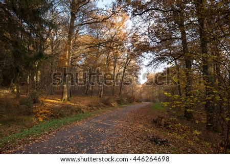 Autumn forest, North Rhine-Westphalia, Germany, Europe