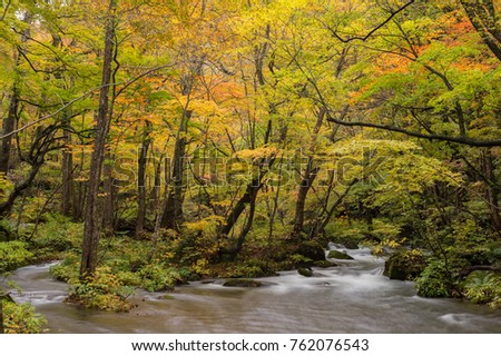 Autumn Forest of Oirase Stream in Aomori, Japan