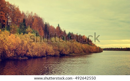 Autumn forest on the bank of the river.