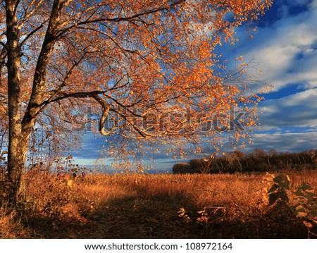 Autumn  forest on the sunset - stock photo