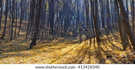 autumn forest panorama - stock photo