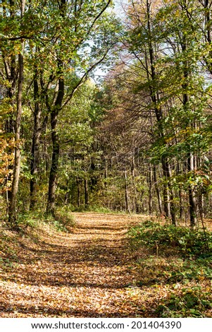 Autumn forest park path covered with colored foliage - stock photo