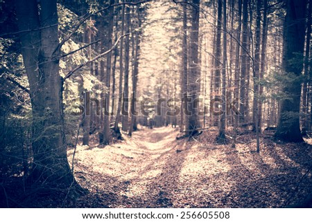 autumn forest path with sun - stock photo