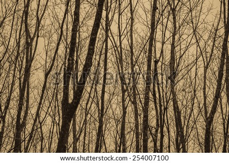 Autumn Forest plantations - stock photo