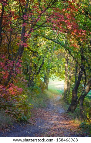 autumn forest road - stock photo