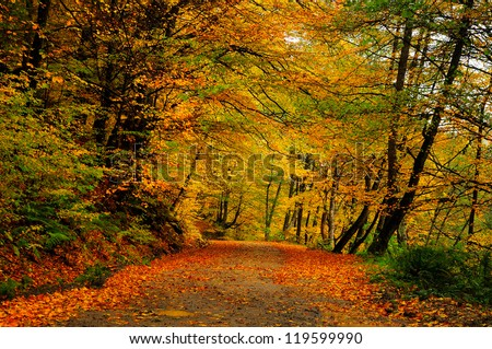 Autumn forest road covered by fallen leafs - stock photo