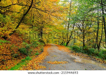 Autumn forest road covered by fallen leafs