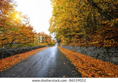 Autumn forest road in the woods