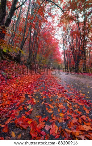 Autumn forest road in the woods - stock photo