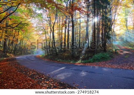 Autumn forest road in the woods, Poland , Ojcow, National Park. - stock photo