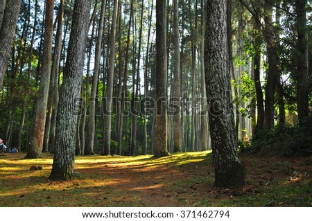 autumn forest trees. nature green wood - stock photo