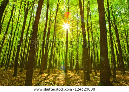 autumn forest trees. nature green wood sunlight backgrounds. - stock photo