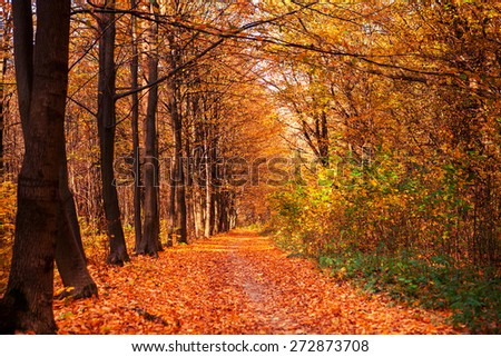 autumn forest trees. nature green wood sunlight backgrounds - stock photo