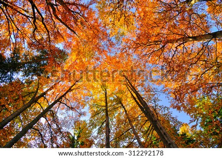 Autumn forest trees. Nature orange wood sunlight backgrounds. - stock photo