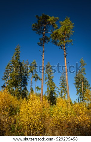 autumn forest trees, view from below