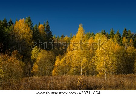 autumn forest under blue sky - stock photo