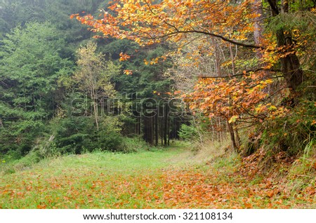 Autumn forest with colorful beech foliage - stock photo