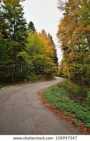 Autumn Forest with Colorful Leaves on Trees and Curved Road