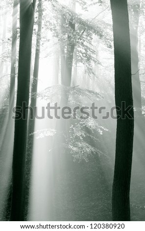 Autumn forest with fog and lights,black and light photo with green filter - stock photo