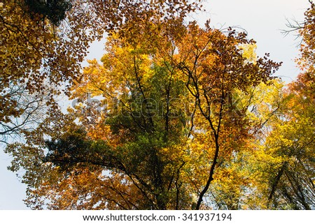 Autumn Forest with Leafs Changing Color - stock photo