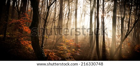 Autumn forest with lights - stock photo