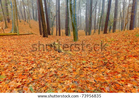 Autumn forest with mist. Ground covered with orange leafs. - stock photo