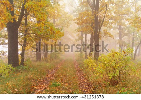 autumn forest with misty morning . - stock photo