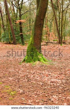 Autumn forest with orange yellow leafs and green moss