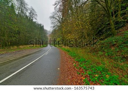 Autumn forest with road. Belgium. Ardennes. Vresse sur Semois.