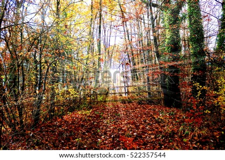 Autumn forest with sun rays shining through