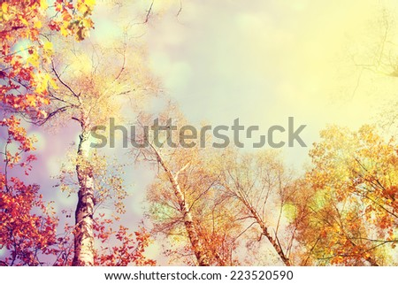 Autumn forest with sunlight and blue sky. - stock photo