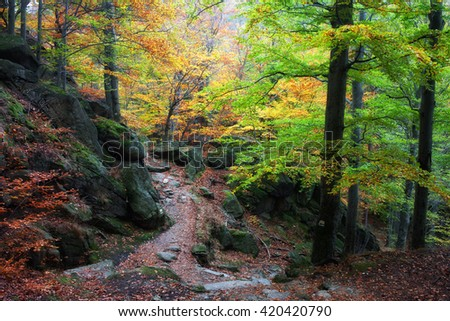 Autumn forest with trail in the mountains, beautiful, tranquil scenery, Karkonosze National Park, Sudetes, Poland