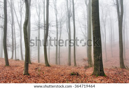 Autumn forest with trees at mist - stock photo