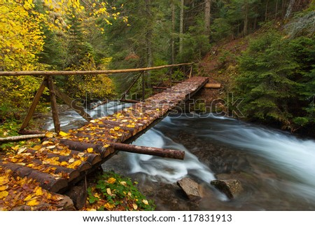 Autumn forest with wood bridge over creek in yellow maple forest