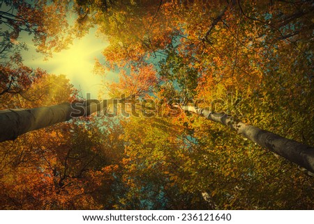 Autumn forest with yellow and red trees. Vintage colors - stock photo